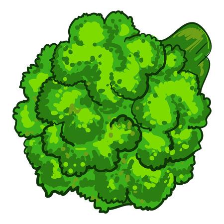 Natural broccoli icon, cartoon style