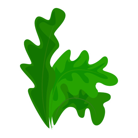 Frisee lettuce icon, cartoon style Stock Photo