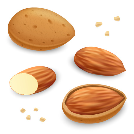 Almond icon set, realistic style Ilustração