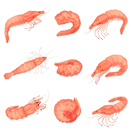 Shrimp icon set, cartoon style