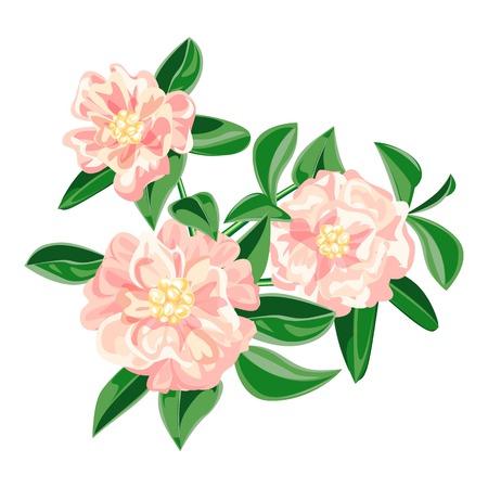 Garden pink camellia icon. Cartoon of garden pink camellia vector icon for web design isolated on white background