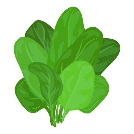 Spinach leaves icon. Cartoon of spinach leaves vector icon for web design isolated on white background