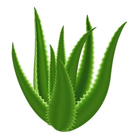 Aloe plant icon, cartoon style