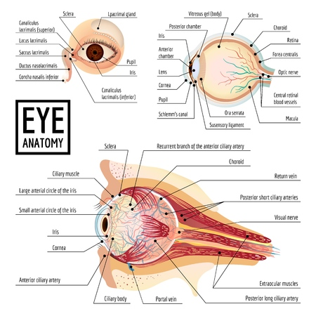 Eyeball infographic, cartoon style Stock Photo