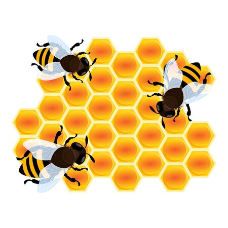 Bee on honey cell icon. Cartoon of bee on honey cell vector icon for web design isolated on white background