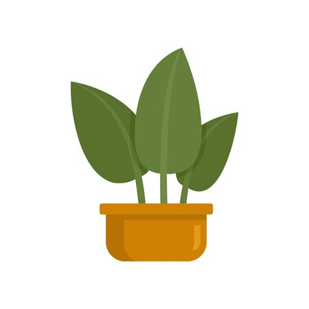 Tropical leaf houseplant icon. Flat illustration of tropical leaf houseplant vector icon for web design