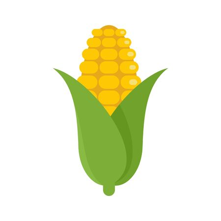 Corn icon. Flat illustration of corn vector icon for web design