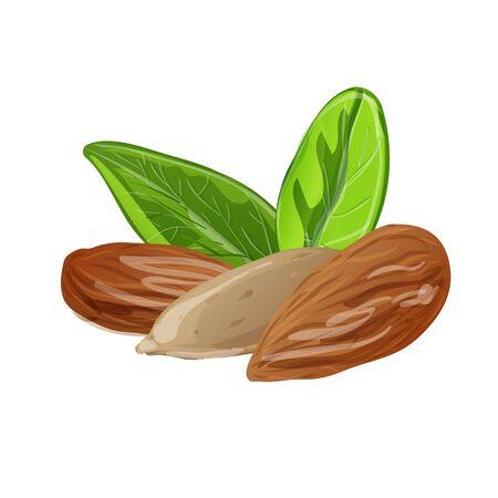 Almond icon, cartoon style Foto de archivo - 133489698