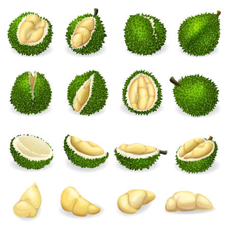 Durian icons set, cartoon style