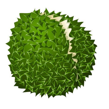 Durian ripe icon, cartoon style 矢量图像
