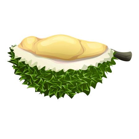 Half durian icon, cartoon style