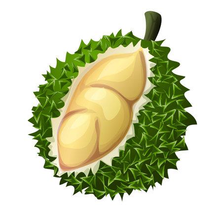 Fresh durian icon, cartoon style