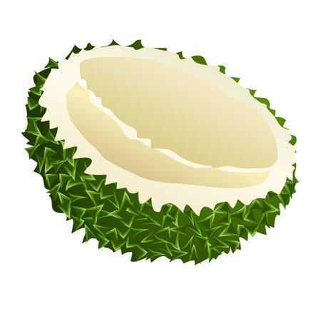 Borneo durian icon, cartoon style