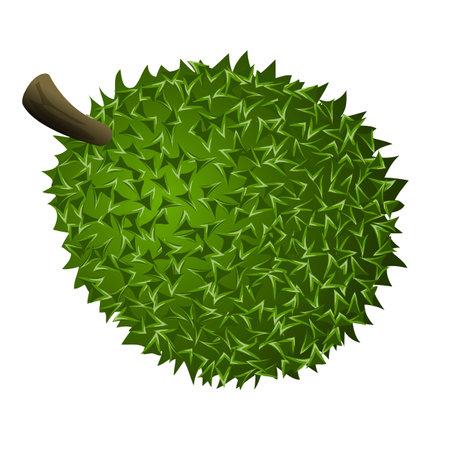 Whole durian icon, cartoon style