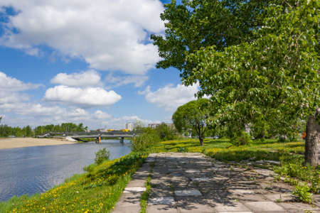 rushy: The river bank is a sunny summer day Stock Photo