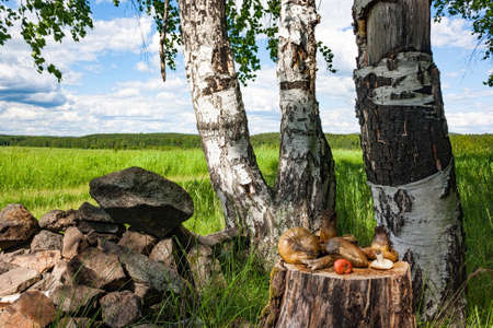 Still life of boletus mushrooms on a tree stump in the forest Stock Photo