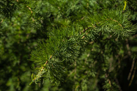 Beautiful tree branches with young light green shoots
