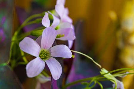 Beautiful indoor white flowers close-up macro shot Stock Photo