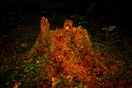 Old mossy stump at sunset in the Ural Mountains Stock Photo