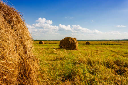 summer rural landscape with a field and hay. Stock Photo