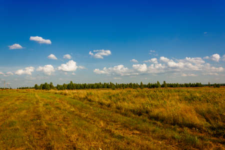 non: summer rural landscape with a field and hay. Stock Photo