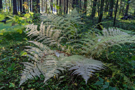Fern leaves in the forest close-up natural background