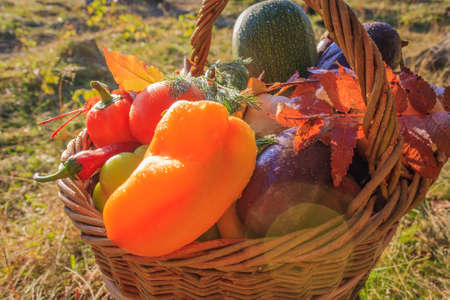 cucumbers: Vegetables . Fresh Bio Vegetable in a Basket. Over Nature Background Stock Photo