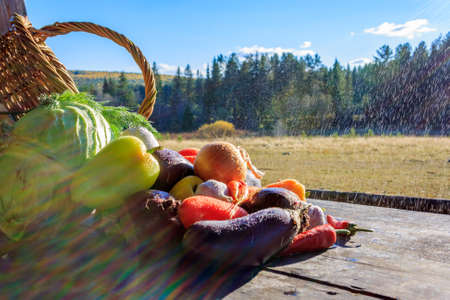 autumn colour: Vegetables . Fresh Bio Vegetable in a Basket. Over Nature Background Stock Photo