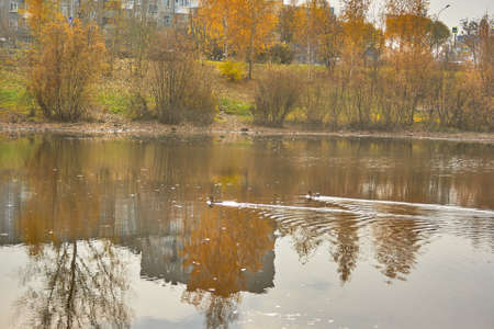 Autumn landscape in the city park by the river Stock Photo - 88105817