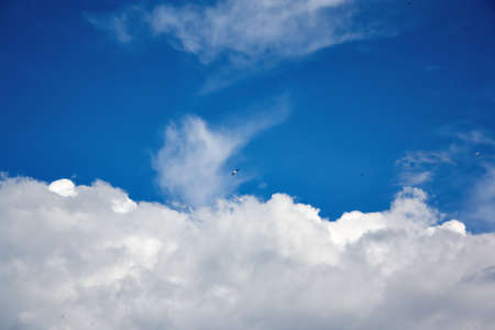 Birds soar in the blue summer sky against the background of white clouds