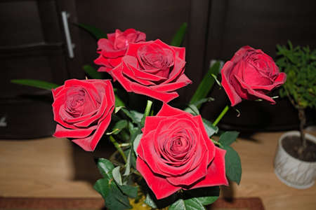 Bouquet of red roses on a blurred background. Close-up.