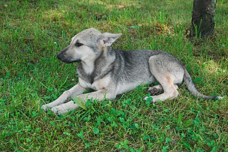 Puppy mongrel lying on grass Stock fotó