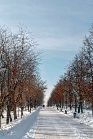 Winter city landscape in the park 스톡 콘텐츠