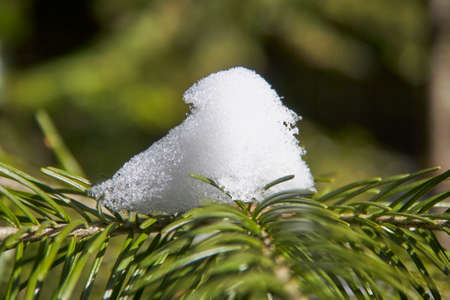 Branch of the Christmas fir-tree with the snow in the winter wood