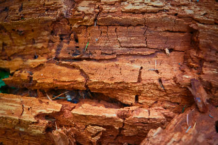 brown very old rotten tree, texture, close-up Stock Photo