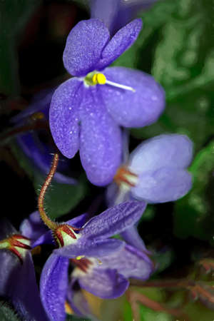 Close up of the violets flowers on blurred background