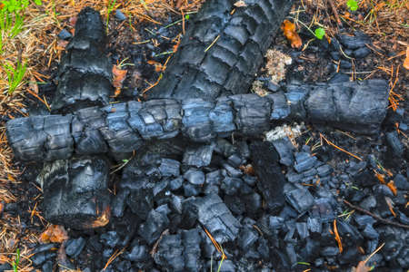 Charcoal of an extinct fire in the forest. Close-up. Natural background Stok Fotoğraf