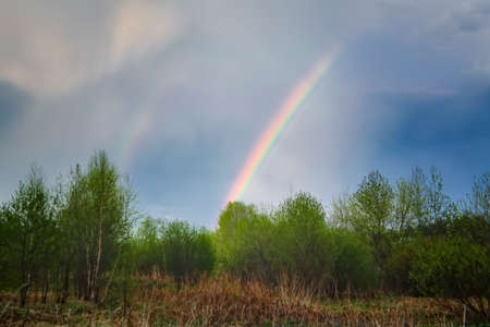 Double rainbow in the sky over the forest.