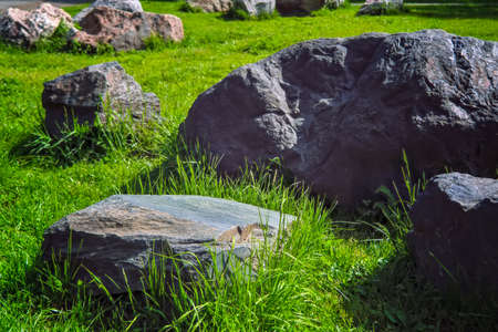 Landscaped summer garden.Garden of stones on the green lawn in the park. Banque d'images