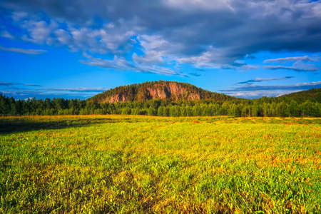 Summer meadow landscape with green grass and wild flowers on the background of a forest, sky and mountains.