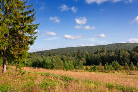 summer landscape. beautiful view from the coniferous forest in the warm evening light Stockfoto
