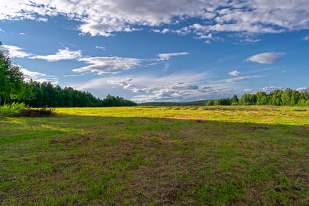 Summer meadow landscape with green grass and wild flowers on the background of a forest and sky.