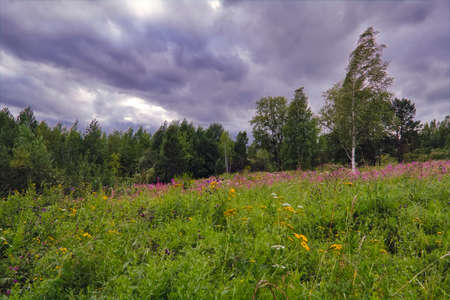 Summer landscape with green grass and wild flowers on the background of a forest.