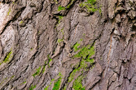 Moss covered Old Wood texture background. Texture of tree bark with green plants. Stockfoto