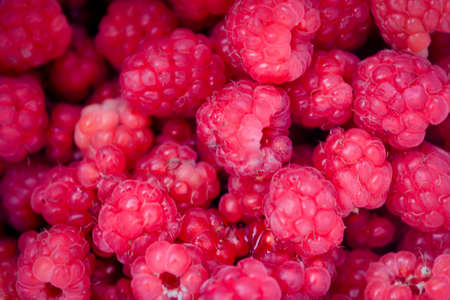 Ripe red berries of wild raspberry close-up.
