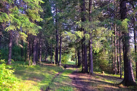 summer landscape. beautiful view from the coniferous forest in the warm evening light. Stok Fotoğraf