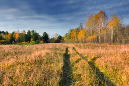 Autumn rural landscape. Yellowed grass in the meadow against the background of the forest and blue sky with clouds.