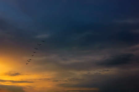 Beautiful sunset with flock of birds. A flock of birds flies against the sky with beautiful clouds lit by the sunset.
