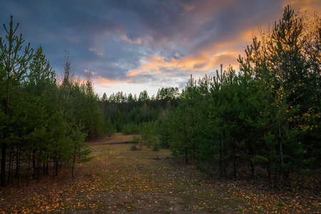 Beautiful mystical forest in autumn. Colorful landscape. Fall colors in october. Nature background. Фото со стока