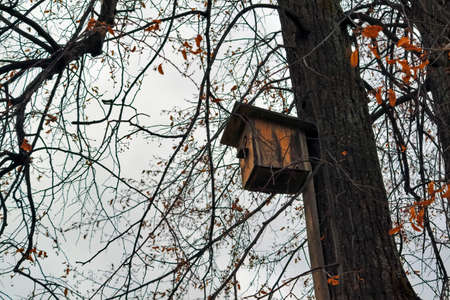 Birdhouse on a tree with fallen foliage in autumn park bottom view.